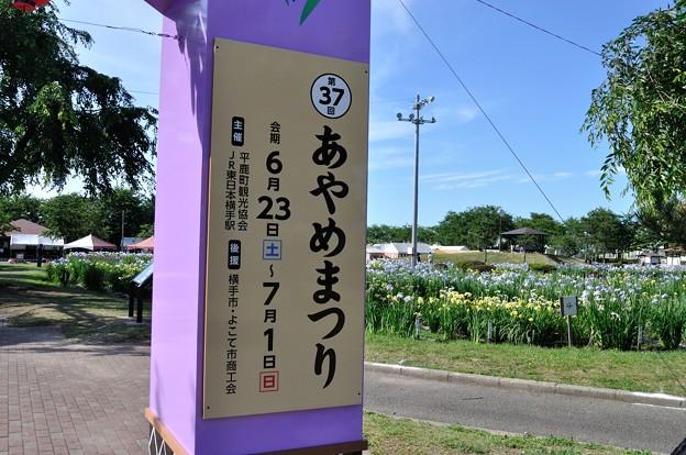浅舞公園 あやめまつり 2018-06-25_28