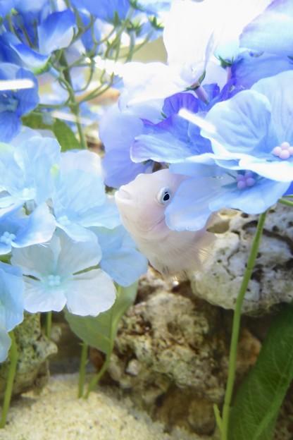 紫陽花の中♪