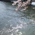 Photos: 花筏~煌めきとともに~♪