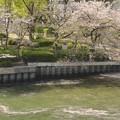 Photos: 花筏~緑の中で~♪