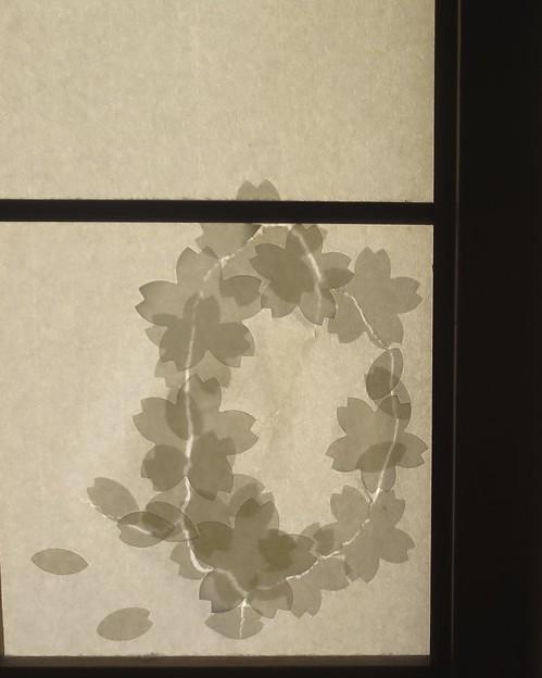 Photos: アフター~桜吹雪~♪