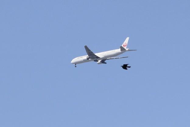 飛行機と並走するカラス~♪