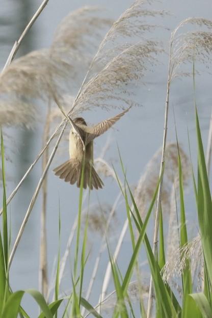 天使の羽~♪