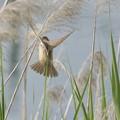 写真: 天使の羽~♪