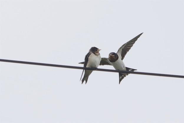 写真: ねぇ一緒に飛ぼうよ~♪