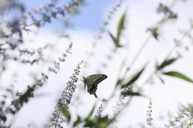 蝶の世界~♪