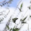 写真: 蝶の世界~♪