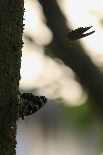 Photos: 飛んでるワニの頭~♪