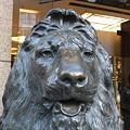 銀座三越のライオン