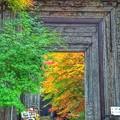 写真: 彩のフォトフレーム