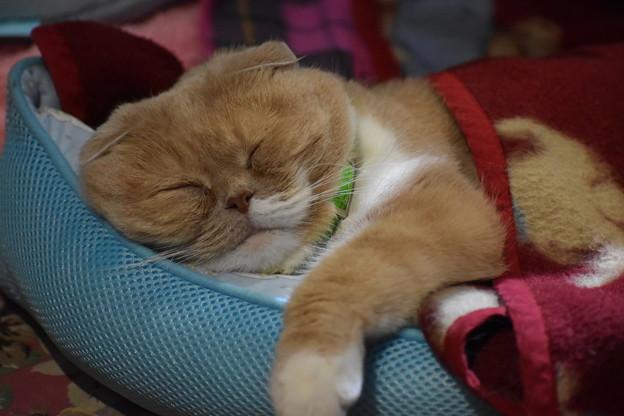 Photos: おやすみ猫
