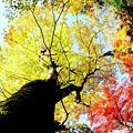 秋盛り-2