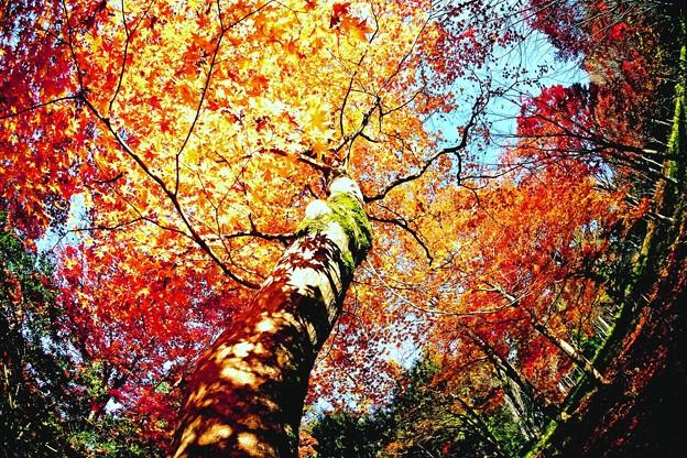 秋盛り-3