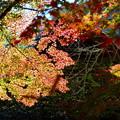 Photos: 里の秋-3
