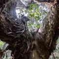 写真: 原始林の秋