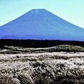Photos: 富士原野の秋