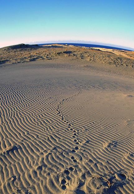 湖西散歩-風紋砂丘-3