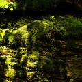 Photos: 影の有るコケ岩壁