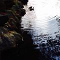 写真: 落葉と鴨ペア