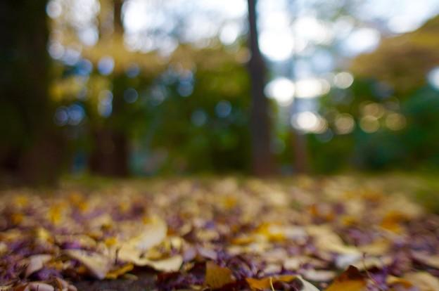 枯れ葉よ~