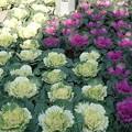 写真: 平湖の植栽