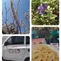 Photos: collage-1553321880064