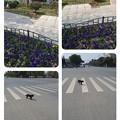 Photos: collage-1553416173883