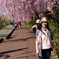 写真: 日中線記念遊歩道枝垂桜-13