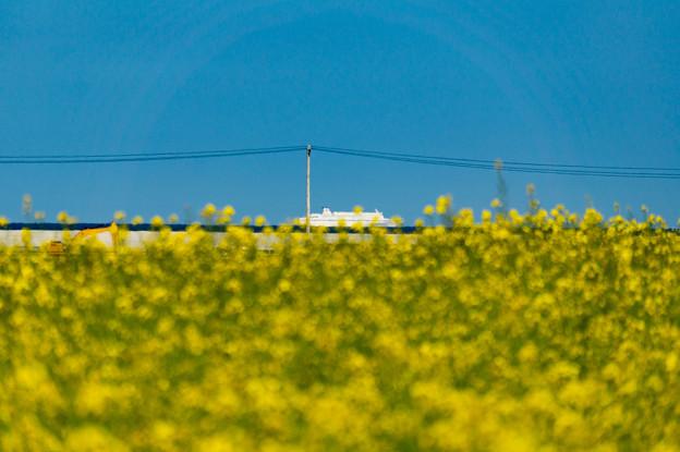青空と菜の花-11