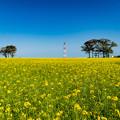 Photos: 青空と菜の花-7