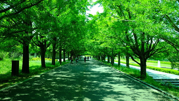 Photos: 緑並木