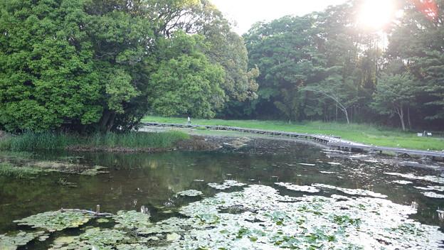 Photos: 湿地