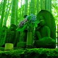 Photos: 緑の座3
