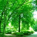 緑の日差し