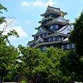 Photos: 夏の城