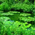 Photos: 緑の庭