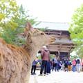 Photos: 古寺と鹿