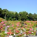 Photos: 躑躅寺