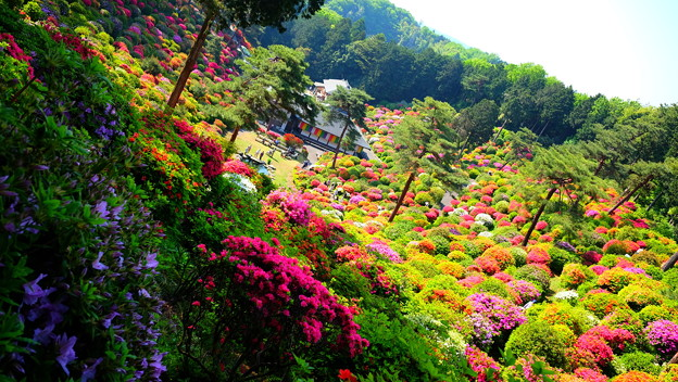 色とりどりの庭