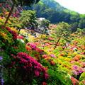 Photos: 色とりどりの庭