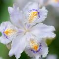 写真: 季節の花 春