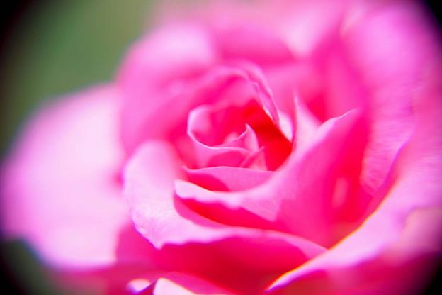バラをクローズアップレンズで