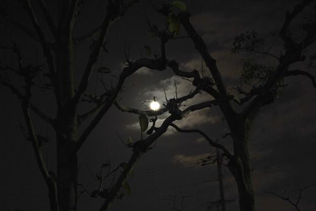 いつかの満月