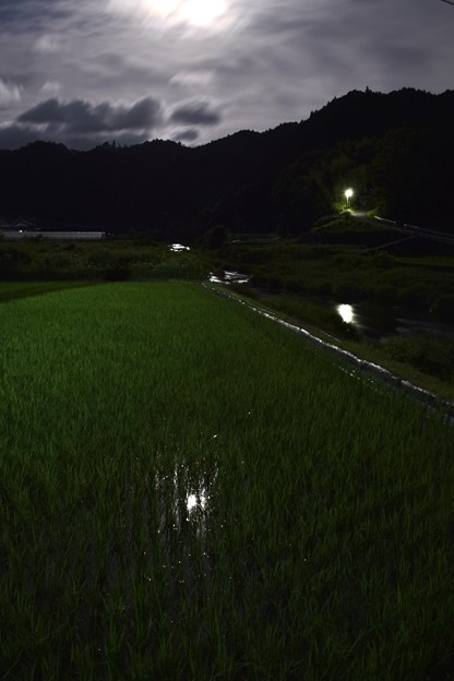 Photos: 水田に映る月