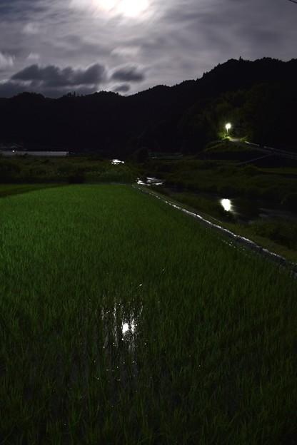 水田に映る月