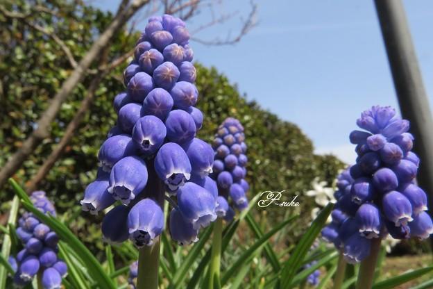 写真: 紫ツリー