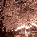 Photos: 夜の宴