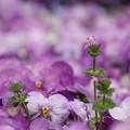 写真: お花畑~
