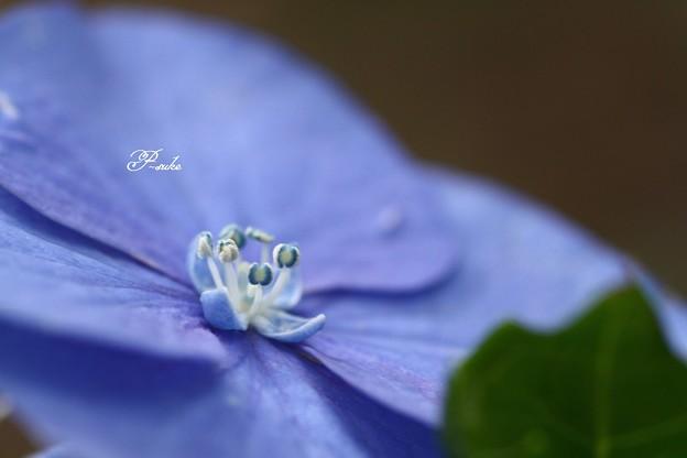 ちっこい花