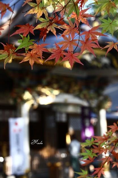 Photos: 本殿とモミジ